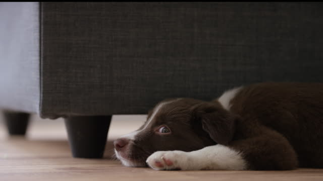 puppy nap - inside of stock videos & royalty-free footage
