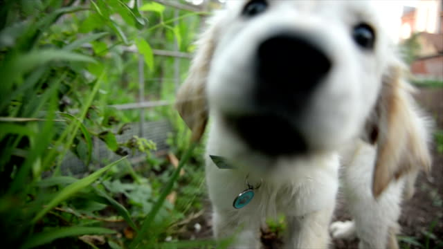 puppy playing. slow motion - puppy stock videos & royalty-free footage