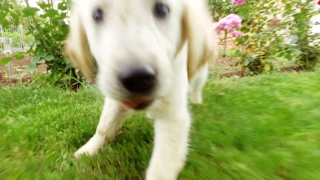 Puppy playing. Slow motion