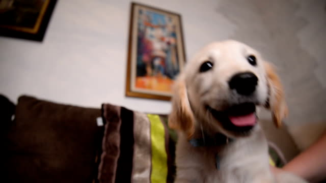 Puppy spelen met eigenaar.