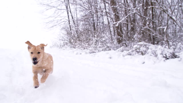 SLO MO Puppy Running In The Snow
