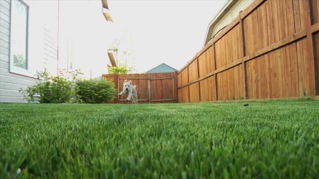puppy running toward camera 2 - fence stock videos & royalty-free footage