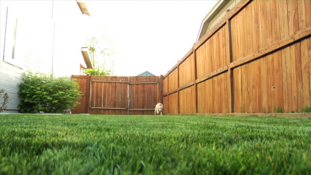 puppy running toward camera - fence stock videos & royalty-free footage