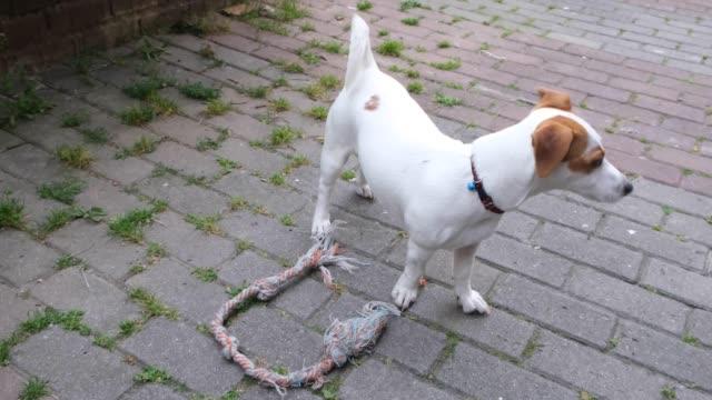 子犬 - 盗み聞き点の映像素材/bロール
