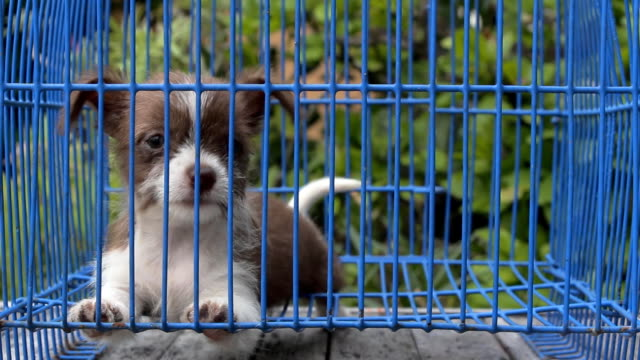 puppy - crate stock videos & royalty-free footage