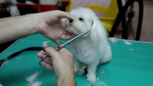 puppy's first grooming experience - scissors stock videos and b-roll footage