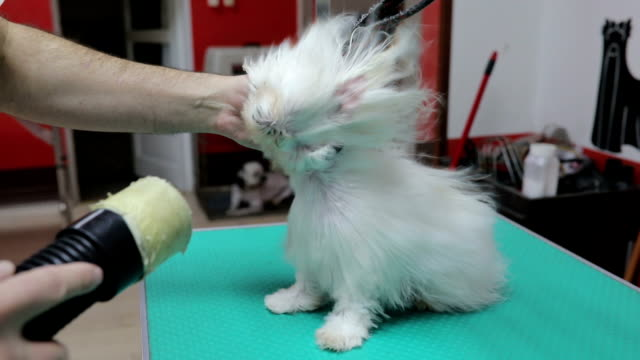 puppy's first grooming experience with hair dryer - dog hair stock videos and b-roll footage