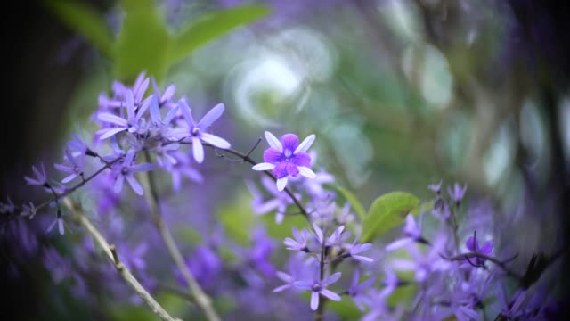 purple apricot flower - apricot stock videos & royalty-free footage