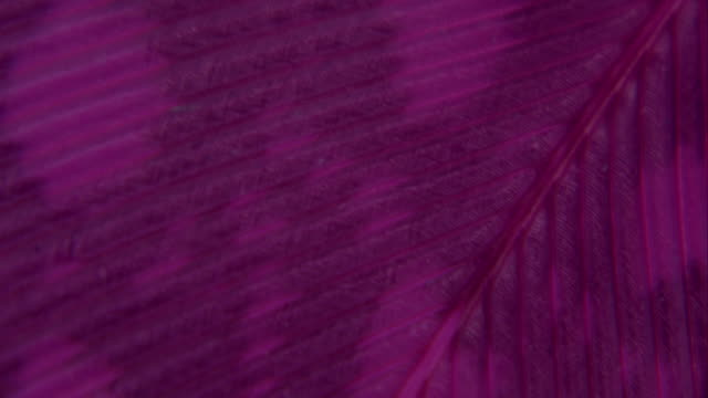 purple colorful feather in extreme close up - feather stock videos & royalty-free footage