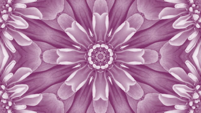 purple floral mandala background with copy space - mandala stock videos & royalty-free footage