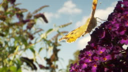 Purple Flower and Yellow Butterfly Macro