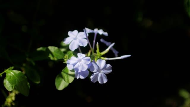 庭に紫の花 - 花粉点の映像素材/bロール