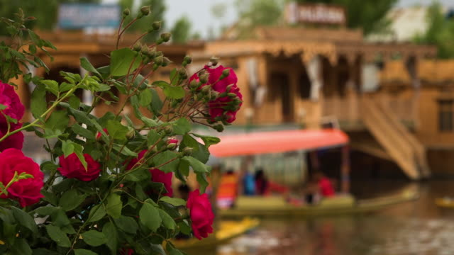 purple flowers in front of a lakeside house - jammu e kashmir video stock e b–roll