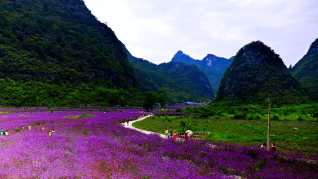 vídeos y material grabado en eventos de stock de púrpura flores como al mar - green de golf