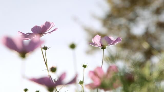cu purple flowers / stowe, vermont - stowe vermont stock videos & royalty-free footage