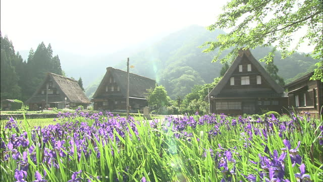 Purple irises bloom in a village of steep thatched roofed houses.