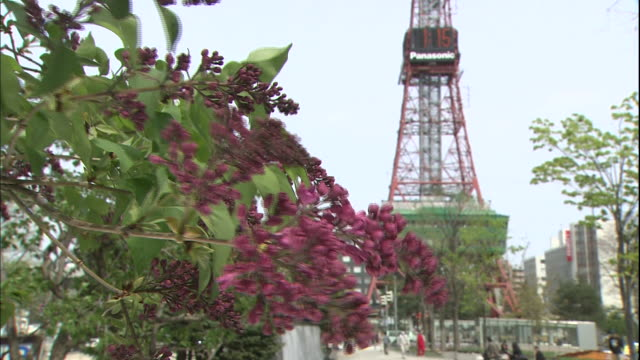 purple lilacs begin to bud on a tree. - テレビ塔点の映像素材/bロール