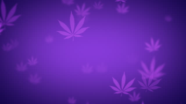 vídeos de stock, filmes e b-roll de purple looping cannabis background animation - estampa de folha