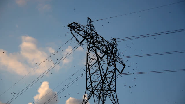 purple martins fly off transmission tower - cable stock-videos und b-roll-filmmaterial