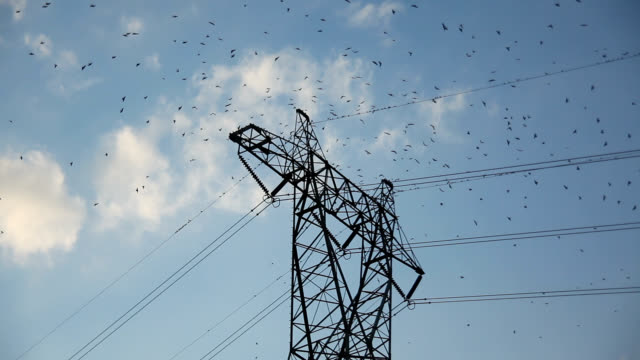 vidéos et rushes de purple martins gathering on tower - haute tension