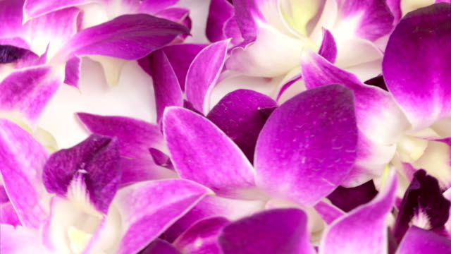 purple orchid flower heads - tropical flower stock videos and b-roll footage