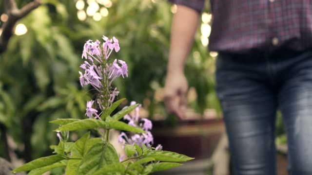 purple/pink flower background farmer walking to sitting touching flower