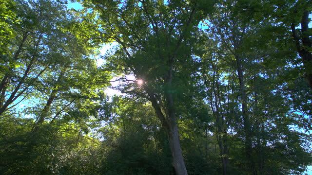 太陽と森の木の間にショットでプッシュ - ネイチャーズウィンドウ点の映像素材/bロール