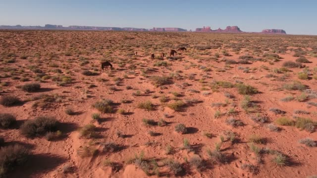 push low to horses Wild horses, drone aerial 4k, monument valley, valley of the gods, desert, cowboy, desolate, mustang, range, utah, nevada, arizona, gallup, paint horse .mov