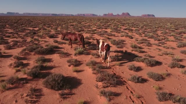 push to behind two wild horses wild horses, drone aerial 4k, monument valley, valley of the gods, desert, cowboy, desolate, mustang, range, utah, nevada, arizona, gallup, paint horse .mov - paint horse stock videos & royalty-free footage