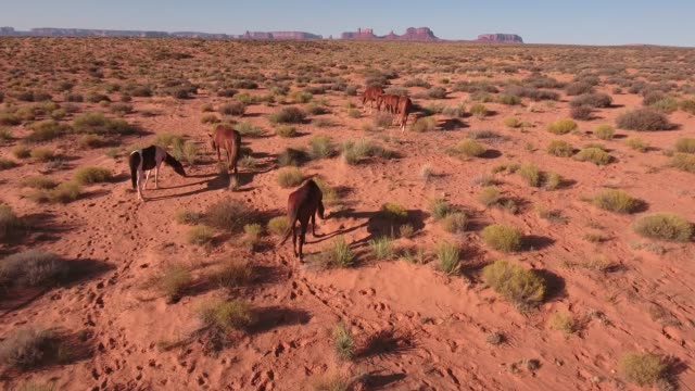 push to pan down of wild horses, drone aerial 4k, monument valley, valley of the gods, desert, cowboy, desolate, mustang, range, utah, nevada, arizona, gallup, paint horse .mov - paint horse stock videos & royalty-free footage
