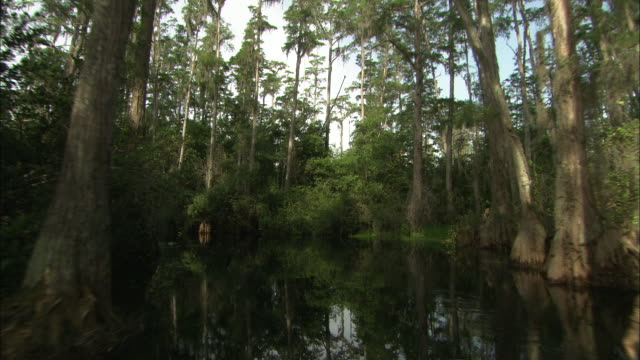 vídeos de stock, filmes e b-roll de pov push-in - lush trees and vegetation surround the okefenokee swamp in florida. / florida, usa - remanso