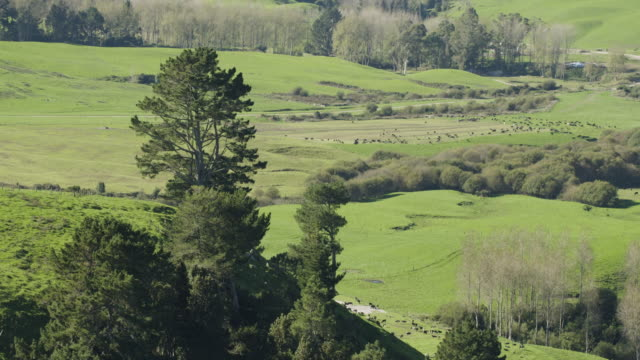 push-in shot of a herd of cows appearing from behind a tree on a hilltop - push in stock videos & royalty-free footage