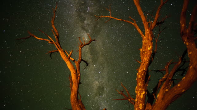Push-in timelapse through a dead Acacia Tree in the Kalahari bushveld, South Africa, shooting towards the Milky Way, until washed out at sunrise
