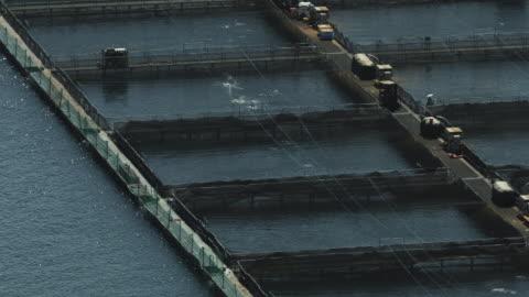 vidéos et rushes de push-out shot of fish pens at a salmon farm - océan pacifique nord