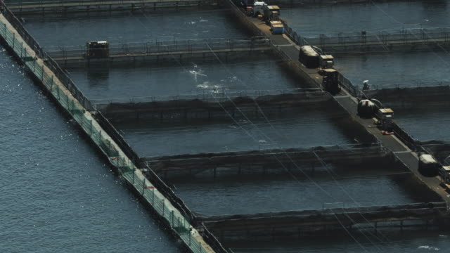 Push-out shot of fish pens at a salmon farm