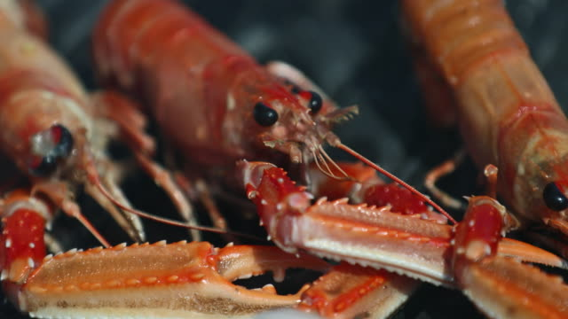 put a shrimp on the barbie - animal antenna stock videos & royalty-free footage