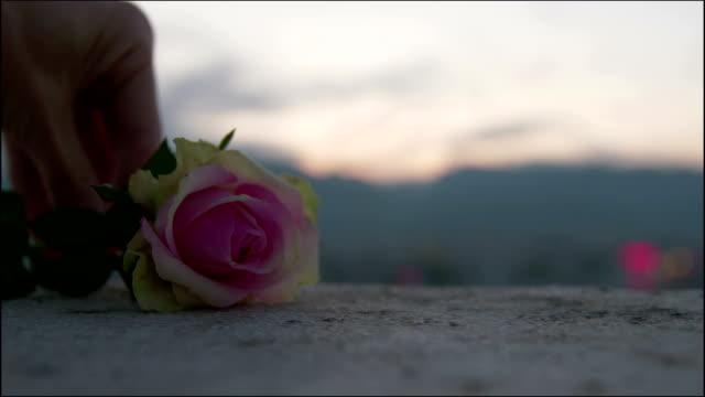vídeos de stock e filmes b-roll de put the rose on the ground - cruz equipamento religioso