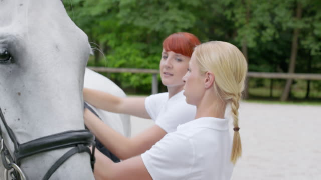pan putting a saddle pad on a white horse - saddle stock videos & royalty-free footage