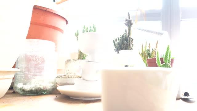vidéos et rushes de mettre le nouveau cactus succulent à pot white out sunshine gardening table - cactus pot
