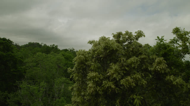 "vidéos et rushes de ""pyramid of mayan temple ruin in forest, calakmul, mexico"" - maya"