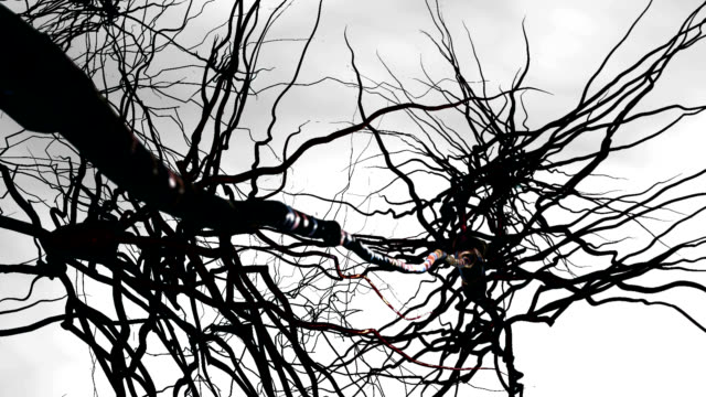 pyramidal nerve cells - digital animation stock videos & royalty-free footage