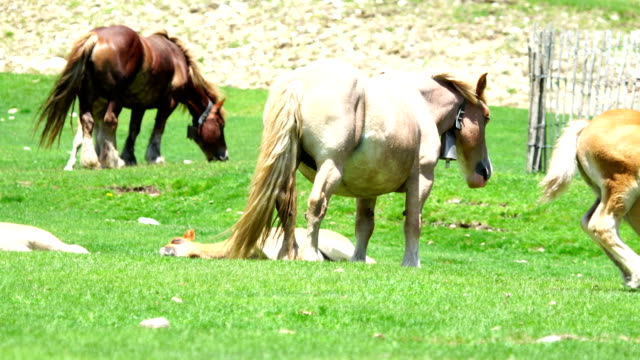 pyrenees mountain horses - horse family stock videos and b-roll footage