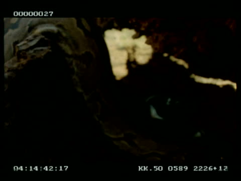 MCU Python entering hollow log & coiling up, inspects interior
