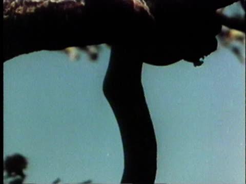vídeos y material grabado en eventos de stock de 1957 montage ms ws td cu python hanging from tree / india / audio - 1957