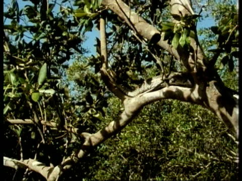 ms python, head in tree, kenya - kenya stock videos & royalty-free footage
