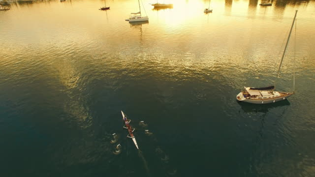 aerial quad scull rowing in the bay - coxless rowing stock videos & royalty-free footage