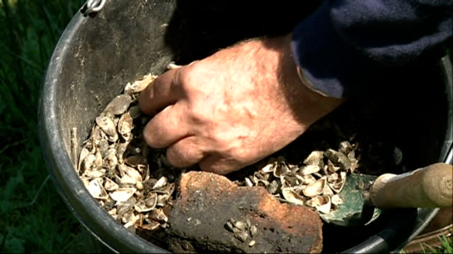 quagga mussels pose threat to uk wildlife systems; r16041409 / london wetland centre: hands holding up zebra mussels in bucket - ムール貝点の映像素材/bロール