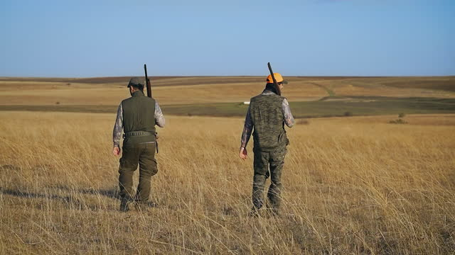 quail hunt, a hunter carefully walks through the field with a rifle in hand while chasing its prey, hunter with his dogs, hunter in the ambush, hunter sees the prey and leads his dog to the hunt, hunter with his dog - hunting stock videos & royalty-free footage