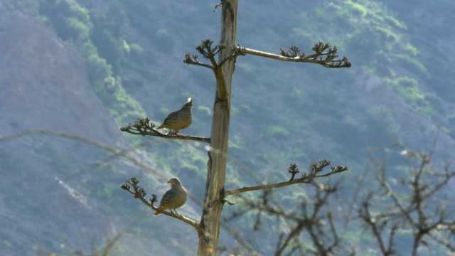 quails perching on tree - perching stock videos & royalty-free footage