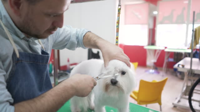 qualified dog groomer at work - working animal stock videos & royalty-free footage